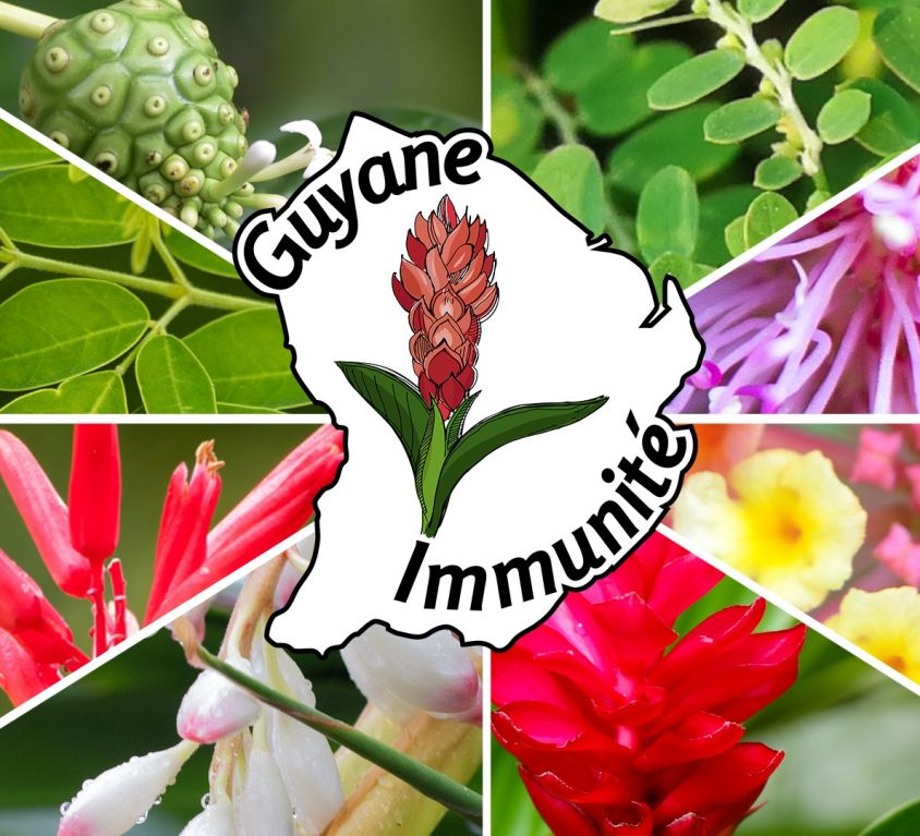 Guyane Immunité