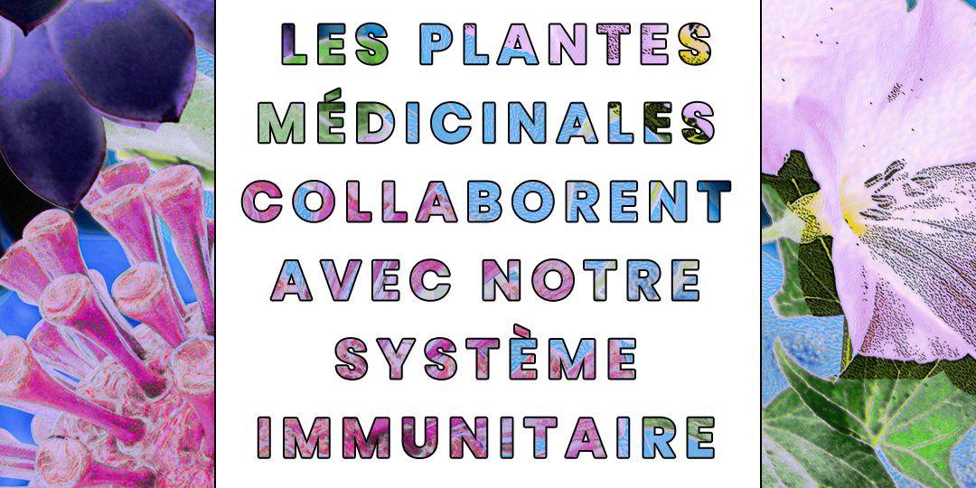 Les-plantes-medicinales-collaborent-avec-notre-systeme-immunitaire